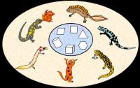 2nd Grade Math Salamanders picture